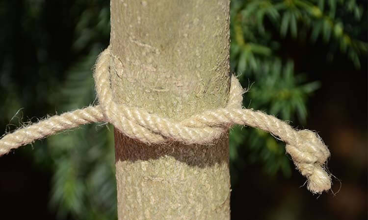 How To Tie A Half Hitch Slip Knot- Useful Guide